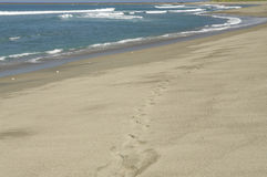Lonely Footprints. WS lone footprints on the Beach - Sigatoka, Fiji Royalty Free Stock Photos