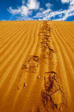 Lonely footprints on desert sand dune Stock Images