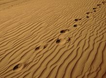 Lonely Footprints in the Sand-Horizontal Royalty Free Stock Photo