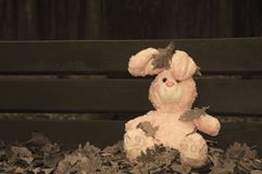 Lonely forgotten abandoned teddy toy bunny rabbit sat on an  wooden bench covered with autumn leaves. Lonely forgotten abandoned royalty free stock image