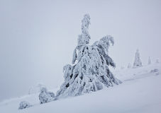 Lonely frozen tree in cold, blizzard conditions Royalty Free Stock Photography