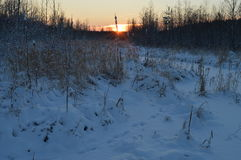 Lonely frozen winter reeds at sunrise in a forest river Royalty Free Stock Image