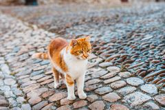 Lonely ginger cat. With big green eyes royalty free stock images