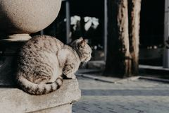 Lonely gray cat sits on the street. Lonely gray cat sits the street royalty free stock photo