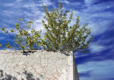 Lonely green bush on the concrete wall Stock Photo