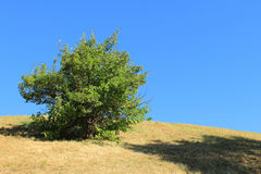 Lonely Green Bush on Dried Dead Grass Hill Stock Photos