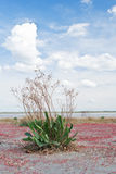 Lonely green bush on dry salty lake Royalty Free Stock Photography