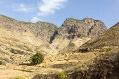 Lonely green palm tree on arid landscape by rocky mountains in Gran Canaria, Spain. Natural panorama views on sunny day in Canary Islands. Hiking, trekking stock images