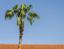 Lonely green palm tree in the blue sky Stock Image