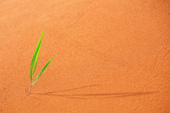Lonely green sprout Royalty Free Stock Photography