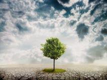 Lonely green tree stock photos