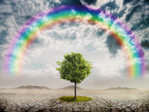 Lonely green tree. In the desert and rainbow Stock Images