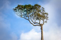 Lonely green tree against the sky Royalty Free Stock Images