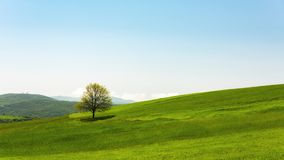 Lonely green tree in farm field Royalty Free Stock Photo