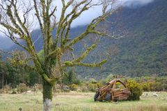A lonely green tree with an old agricultural machine overgrown with moss. / landscape stock image