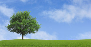 Lonely growing tree Stock Images