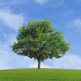 Lonely growing tree Royalty Free Stock Photography
