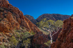 Lonely Gum tree Standley Chasm, Larapinta trail Stock Photo