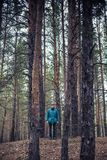 A lonely guy in a pine forest in the autumn time Stock Photography