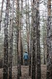 A lonely guy in a pine forest in the autumn time Stock Images