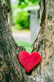 Lonely Heart of a tree Royalty Free Stock Image