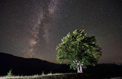 Lonely high tree under starry night sky and Milky way. Illuminated lonely high tree under night sky full of stars and Milky way. Carpathians mountains royalty free stock photography
