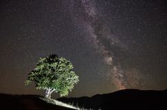 Lonely high tree under starry night sky and Milky way. Illuminated lonely high tree under amazing starry night sky and Milky way in the mountains stock photography