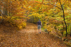 Lonely hiker walking through wild forest in Crimea Stock Image