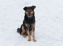 Lonely homeless dog sitting in the snow Royalty Free Stock Photos