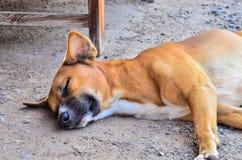 Lonely homeless dog sleeping Royalty Free Stock Photo