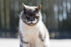 Lonely homeless moustache cat Royalty Free Stock Images