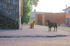 Lonely homeless stray dog on sidewalk street Royalty Free Stock Image