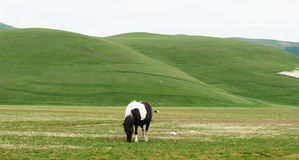 Lonely horse Royalty Free Stock Image