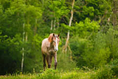The lonely horse. Against the background of the trees Stock Photo