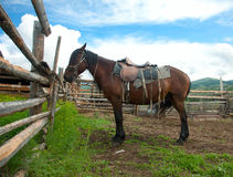 Free Lonely Horse At The Leash Stock Images - 29186304