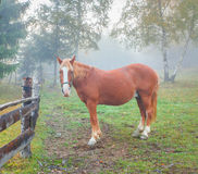 Lonely horse in the foggy forest Royalty Free Stock Image