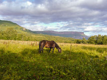 Lonely horse grazing in a field. On a background of mountains Royalty Free Stock Photo