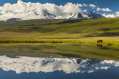 Lonely horse grazing on the lake Royalty Free Stock Photos
