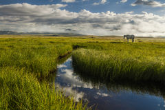 Lonely horse grazing on the lake Royalty Free Stock Image