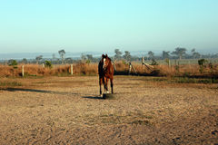 A lonely horse Royalty Free Stock Photography