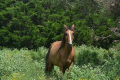 Lonely horse by his self Royalty Free Stock Photography