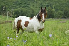 Lonely horse on a meadow in the shot center Stock Image