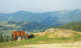 Lonely horse on mountain. Lonely horse standing in the mountains Royalty Free Stock Photography