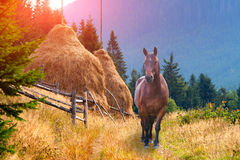 Lonely horse in the mountains Royalty Free Stock Photos