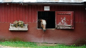 Lonely Horse Stock Photos