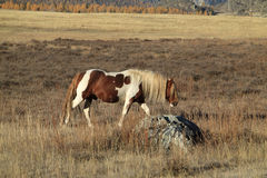 Lonely horse on a pasture Stock Image