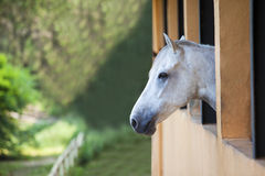 Lonely horse. Picture of one horse staring at the green landscape Royalty Free Stock Images