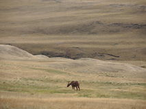 Lonely horse. In the plains Stock Photo