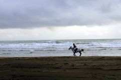 Lonely horse rider on a beach stock images
