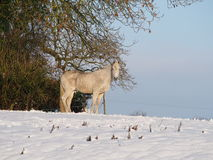 Lonely horse standing in the winter snow Stock Image